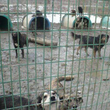 7 Menschen retten 67 Hundeleben