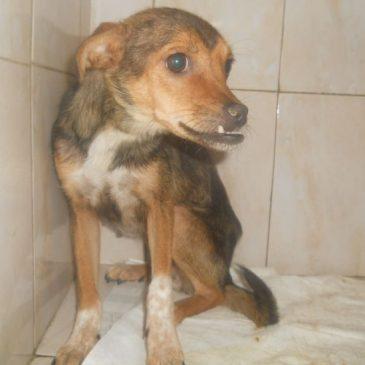 Futterspenden für die hungernden Hunde in Rumänien