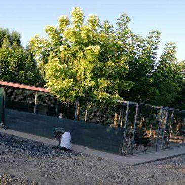 Impressionen der Tierschutz-Reise im August 2018 nach Rumänien