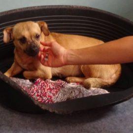 Information über die rechtliche Situation der Hundeverbringung nach Deutschland