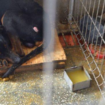 Hunde werden täglich von den Hundefängern in die Tötung gebracht