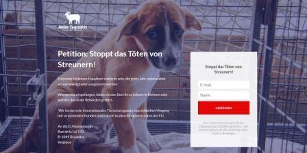Petition: Stoppt das Töten von Streunern!