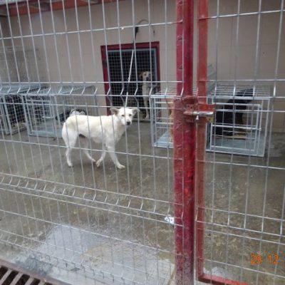 Hier werden die kastrierten Hunde in Transportboxen gehalten, bis sie abgeholt werden von den Adoptanten aus Rumänien. Alle Hunde werden kostenlos abgegeben. Es gab kein Dach zum Schutz vor Regen und Frost, bis wir nicht alles überdachen ließen...