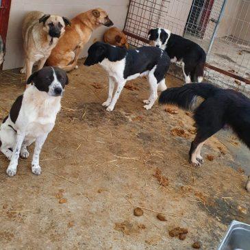 Unsere Hilfe für das städtische Tierheim Constanta